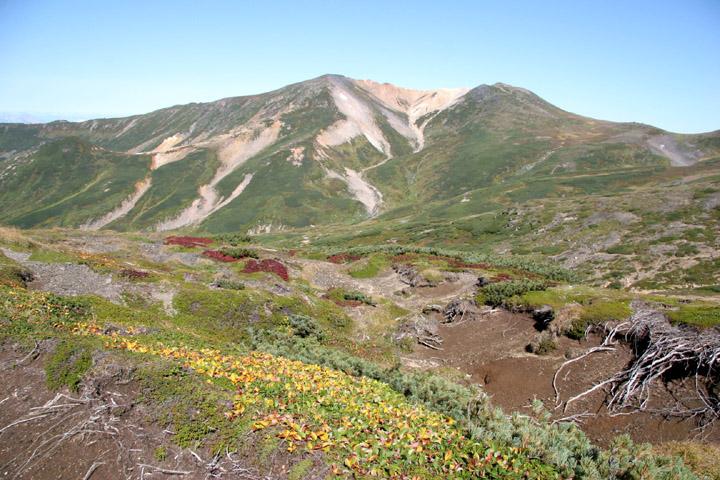 草紅葉と比布岳