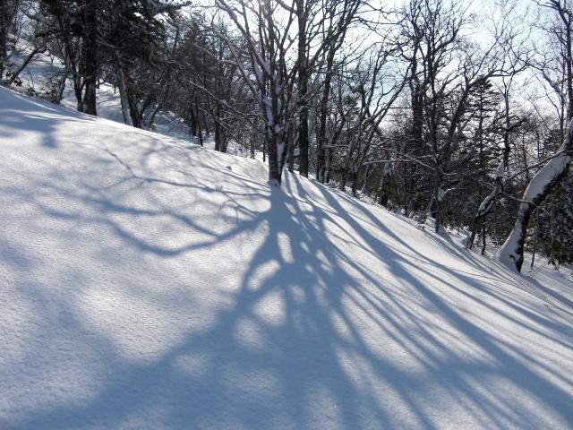 木の影が美しい
